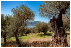 Colline umbre (Pascale_seg) Tags: italie italia umbria ombrie sanfeliciano collines colline olives olive oliviers lac lago lactrasimène lagotrasimeno estate été summer paysage lanscape paesaggio nature natura earth terre campagne countryside countryscape field nikon