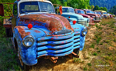 The Lineup_190027 (rjmonner) Tags: rural relic blue grass earth country rustic dry rusted grasses exposed decayed dilapidated dormant bygonedays green history chevrolet nikon idaho chevy isolated jalopy junker happytruckthursday old red metal truck outdoors rust quiet unique neglected quaint antiquity oxidized usa texture vintage y tires vehicle vanishing textured yesteryear unused unpainted truckthursday