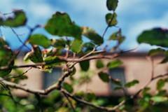The Branches (_mjsantiago) Tags: nikonem nikon filmphotography analogfilm blurry newyorkcity nyc themet thecloisters analogphotography impressionism happyaccidents nomistakes fujifilmsuperia