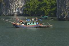 BAHIA DE HALONG (Pepe Rodríguez Cádiz) Tags: halong bay bahía bahíadehalong vietnam viajar barcas barcos pesca mar marina sea