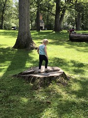 "Dani Plays on a Tree Stump • <a style=""font-size:0.8em;"" href=""http://www.flickr.com/photos/109120354@N07/48823403521/"" target=""_blank"">View on Flickr</a>"