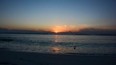 Sunrise over Hyams Beach (moniquerebanks) Tags: hyamsbeach jervisbay sunrise zonsopgang beach bird ocean bay australia nsw travel holiday