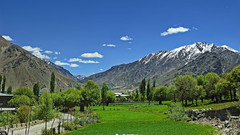 The whispering valley !! (Lopamudra !) Tags: lopamudra lopamudrabarman lopa landscape ladakh india suru suruvalley valley vale himalaya himalayas highaltitude highland verdant green meadow clouds cloud tree trees beauty beautiful picturesque
