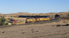 The Ankeny Red Barn (zwsplac) Tags: up uprr union pacific railroad railway red barn ankeny washington ayer subdivision palouse scablands prairie farm train manifest freight mskna gevo es44ac