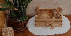 Simba in a little crate (rainy city) Tags: simbacat crate