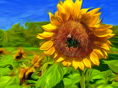 Grace's Sunflower (Rusty Russ) Tags: sunflower field digital processing bee colorful day flickr country bright happy colour scenic america world sunset sky red nature blue white tree green art light sun cloud park landscape summer old new photoshop google bing yahoo stumbleupon getty national geographic creative composite manipulation hue pinterest blog twitter comons wiki pixel artistic topaz filter on1 sunshine image reddit tinder russ seidel facebook timber unique unusual fascinating
