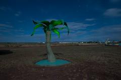 Steel Palm (Nocturnal Kansas) Tags: night nocturnal moon full led1 protomachines d800 nikon nightphotography lightpainting longexposure arizona flinstone fred palm tree