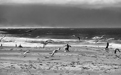 a vIEW fROM aBOVE (wNG555) Tags: bw 2014 oregon pacificcoast capefoulweather capekiwanda pacificcity pacificocean a6000 fav25 fav50 fav100