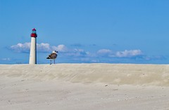 To the lighthouse (mia depaola) Tags: blue sky lighthouse seascape clouds sand seagull capemay minimalist beach canon eos horizon naturallight evocative unstaged yongnuo50mm hiftynifty