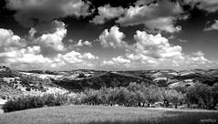 Bell'Abruzzo (remitico) Tags: panorama landscape outside paesaggi paesaggio abruzzo bellabruzzo sky blackandwhite clouds nikon nuvole cielo bianconero ulivi absoluteblackandwhite darktable d7500 bwartaward hanks