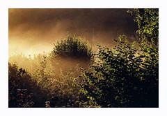 N Lindholmen - Kodak Pro Image 100 (magnus.joensson) Tags: sweden swedish skåne svedala fog haze autumn september fujica st801 carl zeiss jenna ddr 135mm kodak pro image 100 24x36 c41 m42
