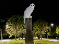 The Owl Statue on Tuesday morning (garydlum) Tags: owlstatue publicart