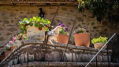Dimitsana, Arcadia Greece (Ioannisdg) Tags: peloponnese ioannisdg arcadia travel greece easter2019 flickr ioannisdgiannakopoulos filosofoumonastery dimitsana peloponneseregion ithinkthisisart