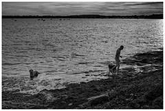 le tour du parc - wandelaar bw (marc.demeuleneire) Tags: selecteren france bretagne sunset sea dog bw littledoglaughednoiret