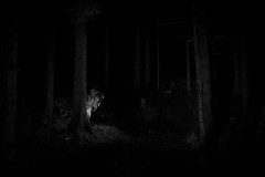 in the deepest (the ripped bystander) Tags: blackwhite night darkness forest female fairy trees