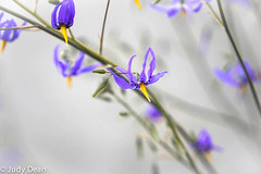 Kew (judy dean) Tags: judydean 2017 kew gardens purple flower
