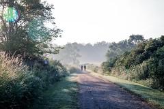 ordinary morning (Yuki (8-ballmabelleamie)) Tags: chainolakesstatepark morning mist misty fog foggy path trail hiking rawtexture illinois mchenrycounty tallgrassprairie latesummer august midwest canoneos6dmarkii