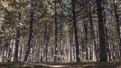 En su casa (Alberto Lacasa) Tags: mascota lena portrait bosque nature pets outdoor canon animal pirineos sabiñanigo pinar trees arboles pet forest perros dog naturaleza retrato perro animallovers pyrenees dogs