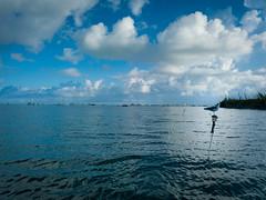 9-28-19-StockImages-10 (Daniel Wedeking) Tags: animal bird cloud florida floridakeys island keywest ocean seagull sky unitedstatesofamerica