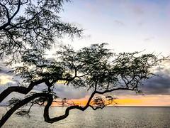 Good Vibrations (Thomas Hawk) Tags: america hawaii maui usa unitedstates unitedstatesofamerica wailea waileaelua sunset tree kihei fav10 fav25 fav50 fav100