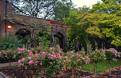 Arches (Giulia C) Tags: london holland park roses arches londra uk hollandpark