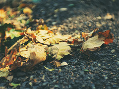 beside the road (LiquidStep) Tags: besidetheroad nature autumn fall leaves bokeh manuallens cctv cmount olympusomdem10markii fujian35mmf17cctv fujian35mm fujian