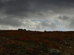 Grasses (dration) Tags: kungsleden sweden lapland landscape sky clouds