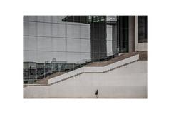 Who Is This Lady (henny vogelaar) Tags: germany berlin architecture streetphotography women color building reflections hennyvogelaarfotografie marieelisabethlüdershauses stephanbraunfels glass concrete regierungsviertel spree