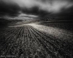 Palouse Harvest 3 (bern.harrison) Tags: colfax washington palouse field wheat blackwhite toned clouds agriculture rural