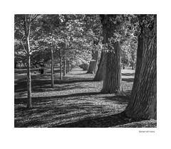 Generations (agianelo) Tags: liberty park trees afternoon sun shadows monochrome bw bn blakandwhite
