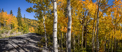 Great Basin Fall Panorama (Jeff Sullivan (www.JeffSullivanPhotography.com)) Tags: aspen fall colors great basin national park baker eastern nevada usa american southwest landscape nature travel photography nikon d850 nikkor 1735mm lens photo copyright jeff sullivan 2019 september panorama trail head