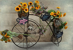 Tea and Flowers (Jocelyn777) Tags: flowers sunflowers lavender bouquet bicycles signs decoration textured teruel spain travel