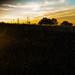 Skyline at Big Meadow