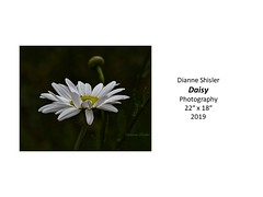 """Daisy • <a style=""""font-size:0.8em;"""" href=""""http://www.flickr.com/photos/124378531@N04/48827148543/"""" target=""""_blank"""">View on Flickr</a>"""