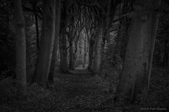 Into the dark Woods (Pieter Musterd) Tags: meerenbos park landgoed estate pietermusterd musterd canon pmusterdziggonl nederland holland nl canon5dmarkii canon5d denhaag 'sgravenhage thehague lahaye
