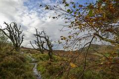 CloudPath (Tony Tooth) Tags: nikon d600 tamron 2470mm hdr path pathway footpath moors moorland hencloud upperhulme staffs staffordshire staffordshiremoorlands england trees