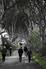 "Happy ""Game of Thrones"" fans (Towner Images) Tags: ireland towner landscape trees people fans beech"