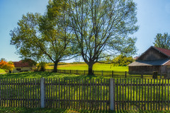 Trees, Fences and Shadows (suzanne~) Tags: htmt hff tree fence fencedfriday bavaria germay farm countryside