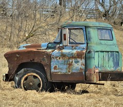 Abandoned Chevy farm truck hulk, Simcoe County, Ontario. (edk7) Tags: nikond300 nikonnikkor135mm135aimanualfocuslens edk7 2013 canada ontario simcoecounty old truck chevrolet chevy vintage historic classic automobile auto abandoned ruin rust farm field crop wreck rural country countryside tree fence