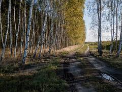 forest road (MR_Bundy) Tags: mi8 xiaomi autuumn