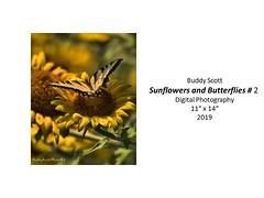 "Sunflowers and Butterflies #2 • <a style=""font-size:0.8em;"" href=""http://www.flickr.com/photos/124378531@N04/48827522931/"" target=""_blank"">View on Flickr</a>"