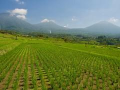 Bali (Stephen Walford Photography) Tags: bali indonesia jatiluwih rice paddy travel traveldestination southeastasia olympus em5mark2 sky mountains landscape green