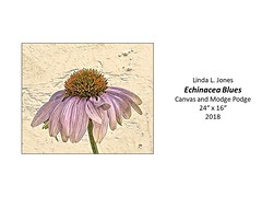"Echinacea Blues • <a style=""font-size:0.8em;"" href=""http://www.flickr.com/photos/124378531@N04/48827682557/"" target=""_blank"">View on Flickr</a>"