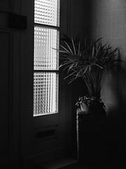 Entrée (christophe.vinchon) Tags: ombre lumière entrée hall hp5 plante