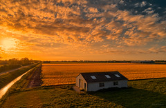 An old shed observing the sunset. (Alex-de-Haas) Tags: dji holland netherlands dutch europa europe nederland aerial phantom nederlands noordholland phantom4 p4p fc6310 phantom4pro flowers beautiful beauty barn farming farmland agriculture flowerfields aerialphotography bloemen bulbfields bollenvelden landbouw boerenland akkerbouw bloemenvelden landscape mooi lucht polder lente landschaft landschap pracht schuur landscapephotography landschapsfotografie schoonheid luchtfotografie quadcopter sunset sky spring zonsondergang skies sundown tulips shed tulip shack tulpen tulp northholland warmenhuizen