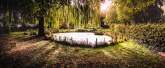 Ultimate pano (mikedeclerck) Tags: nature trees river water lake sun summer spring autumn seaon naturelovers nationalgeographic nationalpark natgeo canon camera