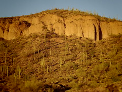 day trip to scottsdale (EllenJo) Tags: pentaxqs1 arizona az september30 2019 ellenjo saguaros interstate17 sunsethill sonorandesert cactus