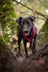 Betti (www.altglas-container.de) Tags: betti haustier baum tree pet nature dog gangrel forest mischling wald natur hund