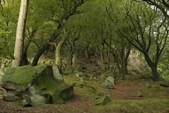 ShadyBower (Tony Tooth) Tags: nikon d600 nikkor 50mm f18g trees bower beech rocks hillside shady canopy hencloud upperhulme staffs staffordshire staffordshiremoorlands wood woodland