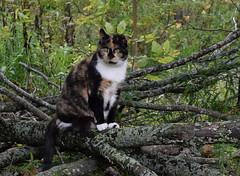 Skittles (jmunt) Tags: cat stewartjcat